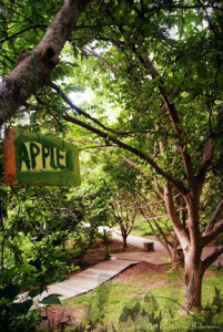 Apple sign- Asheville